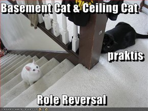 Basement Cat & Ceiling Cat praktis Role Reversal