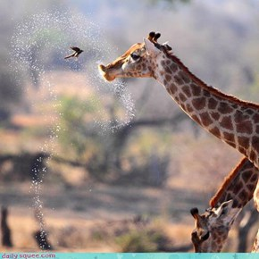 Acting Like Animals: Say It, Don't Spray It