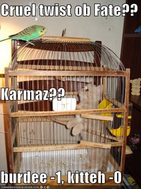 Cruel twist ob Fate??  Karmaz?? burdee -1, kitteh -0