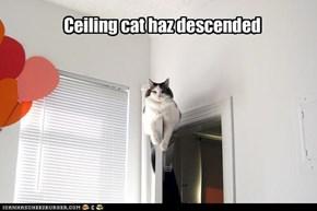 Ceiling cat haz descended