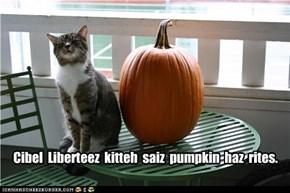 Cibel  Liberteez  kitteh  saiz  pumpkin  haz  rites.