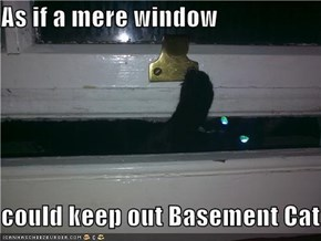 As if a mere window  could keep out Basement Cat