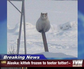 Breaking News - Alaska: kitteh frozen to teeter totter!~