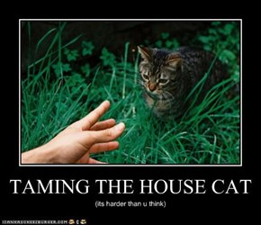 TAMING THE HOUSE CAT