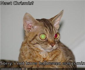 Nawt Chrismis?  Sorry, i not know halloween was coming