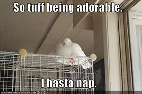 So tuff being adorable.  I hasta nap.