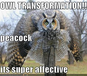 OWL TRANSFORMATION!! peacock its super affective