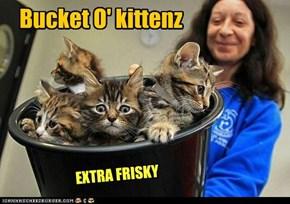 Bucket O' kittenz
