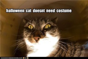 halloween  cat  doesnt  need  costume
