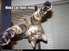 Ninja cat flyin' rong