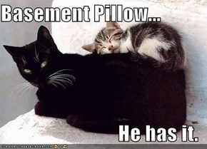 Basement Pillow...  He has it.