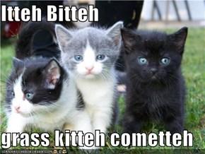 Itteh Bitteh  grass kitteh cometteh