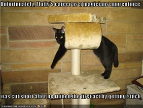 Unfortunately, Fluffy's career as a magicians apprentince  was cut short after he ruined the first act by getting stuck
