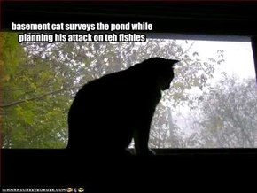 basement cat surveys the pond while planning his attack on teh fishies