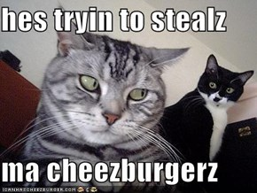 hes tryin to stealz   ma cheezburgerz