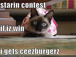 starin contest if iz win i gets ceezburgerz