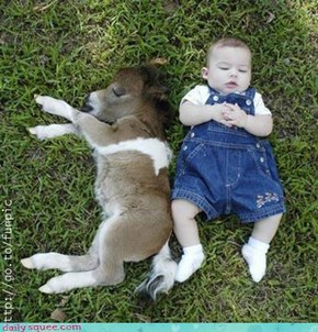 Baby Donkey and Baby Human