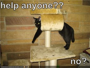 help anyone??                              no?