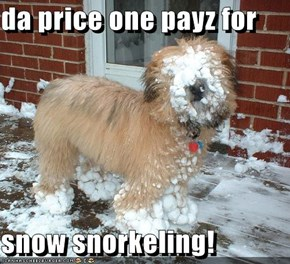 da price one payz for  snow snorkeling!