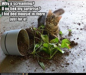 Why u screaming?  U no liek my surprise?  I hid ded mousie in there             just for u!