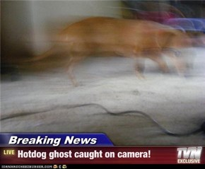 Breaking News - Hotdog ghost caught on camera!
