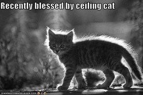 Recently blessed by ceiling cat