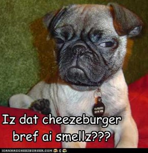Iz dat cheezeburger bref ai smellz???