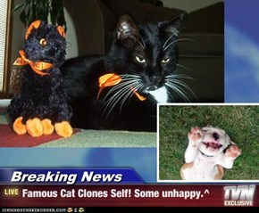 Breaking News - Famous Cat Clones Self! Some unhappy.^