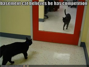 basement cat believes he has competition
