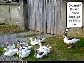 Ok, enuff flockin' 'round here, git up & lets go!