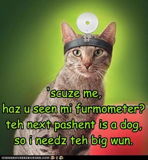 'scuze me, haz u seen mi furmometer? teh next pashent is a dog, so i needz teh big wun.