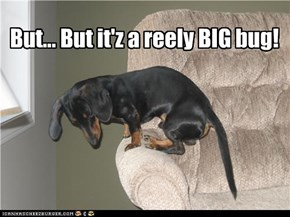 But... But it'z a reely BIG bug!