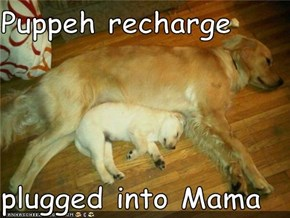 Puppeh recharge  plugged into Mama