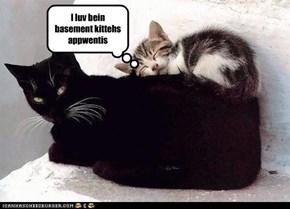 I luv bein basement kittehs appwentis