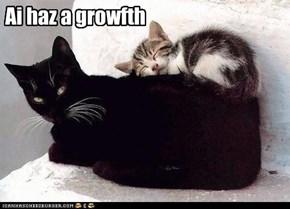 Ai haz a growfth