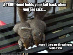 A TRUE friend holds your tail back when you are sick.....