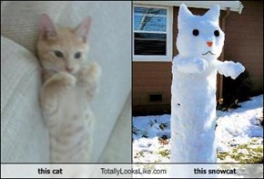 this cat Totally Looks Like this snowcat