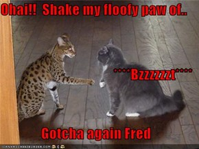Ohai!!  Shake my floofy paw of.. ****Bzzzzzzt**** Gotcha again Fred