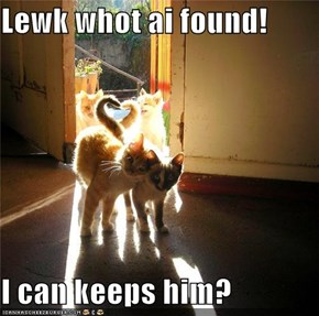 Lewk whot ai found!  I can keeps him?