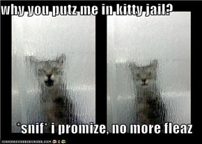 why you putz me in kitty jail?  *snif* i promize, no more fleaz