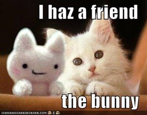 I haz a friend   the bunny