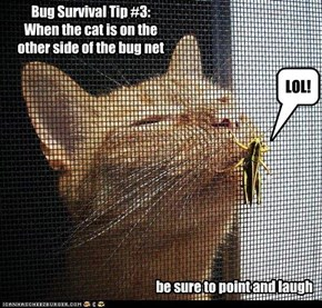 Bug Survival Tip #3:  When the cat is on the  other side of the bug net