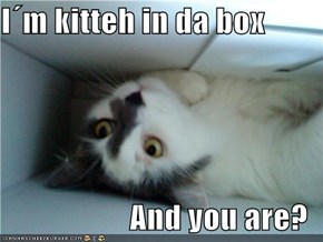 I´m kitteh in da box  And you are?