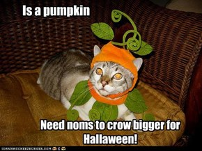 Is a pumpkin