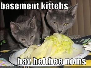 basement kittehs  hav helthee noms
