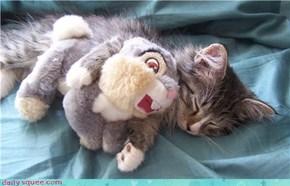 Figaro cuddling his thumper