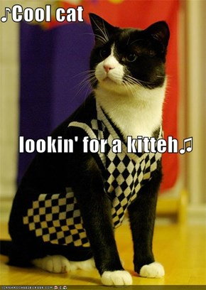 ♪Cool cat lookin' for a kitteh♫