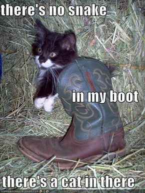 there's no snake in my boot there's a cat in there