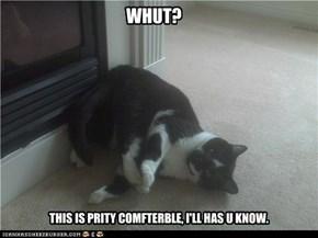 Contortionist Kitteh