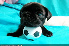Cyoot Puppeh Ob Teh Day: Mai ball! Mine!